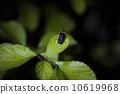 萤火虫 10619968