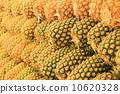 สับปะรด 10620328