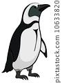 animal, penguin, polar 10633820