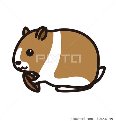 hamster 10636149