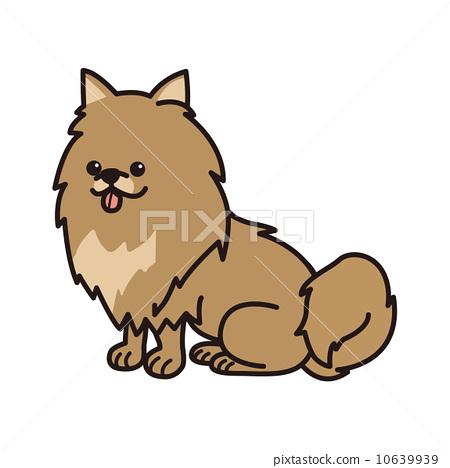 Pomeranian 10639939