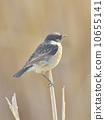 鸟类 异域风情 异国情调 10655141