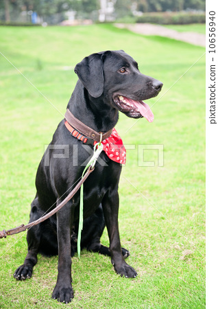 Kneeling pet dog 10656940