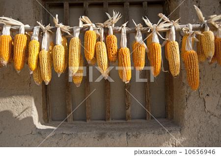 窗前晾晒的玉米 10656946