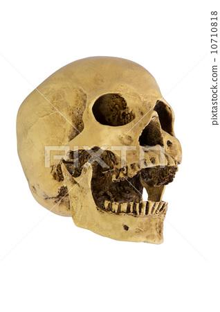 human skull 10710818