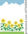 푸른 하늘 해바라기 밭 10750664