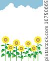 푸른 하늘 해바라기 밭 10750665