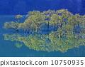 신록의 시라카와 호수 10750935