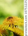 dandelion bee flower 10753225