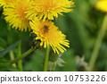 dandelion bee flower 10753226