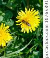 dandelion meadow summer 10765891