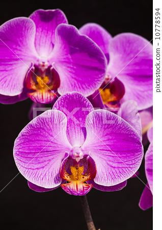鮮豔的蘭花 10778594