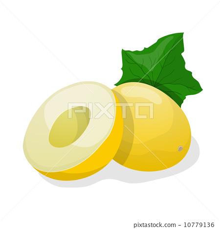 Ripe melon. Vector illustration 10779136