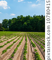 Field with furrows 10780415