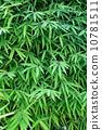 Bamboo leaf wall 10781511