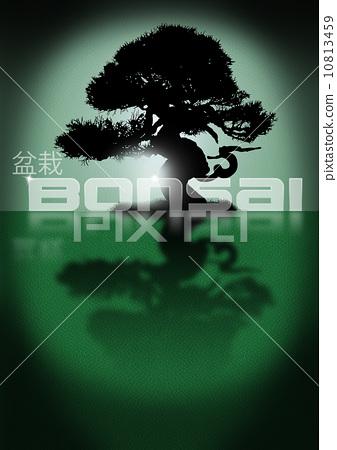 Bonsai 10813459