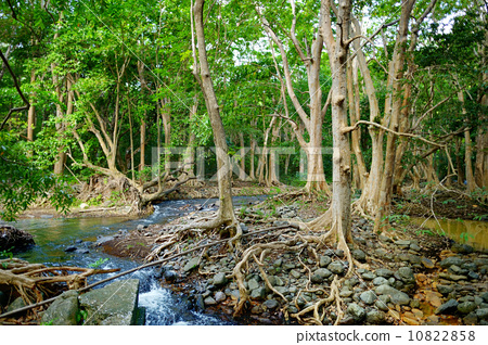 Tropical jungles of Mauritius island 10822858