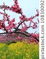 Togen Festival 10830092