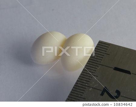 도마뱀의 계란 10834642