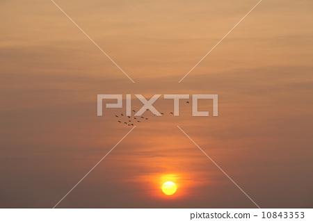 夕陽餘暉 10843353