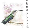 hummingbird, animal, art 10875528