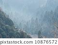 松林 花粉 樹林 10876572