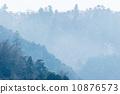 松林 花粉 樹林 10876573