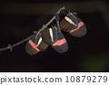 休息與分支的蝴蝶 10879279