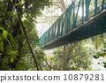 在雨林的吊橋 10879281