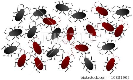 cockroach 10881902