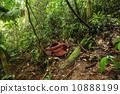 라플레시아 정글 10888199