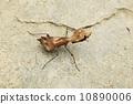 나뭇잎 사마귀 10890006