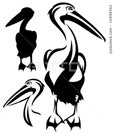 pelican bird black and white outline - vector collection of bird head design and silhouette 10898462