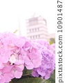 ดอกไม้,โยโกฮาม่า,การท่องเที่ยว 10901487