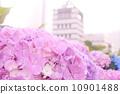 observation tower, viewing platform, bloom 10901488
