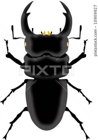 Stag beetle 10909927