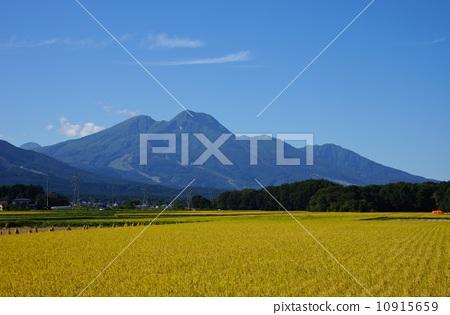 Mt. Myoko and rice ear 10915659