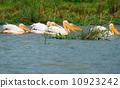 animal water river 10923242