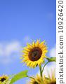 藍天和向日葵 10926420
