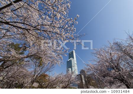 Spring Harukasu 10931484