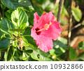 beautiful, beauty, asia 10932866