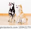 二 2 宠物 10942270