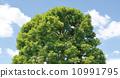 真正的树 10991795