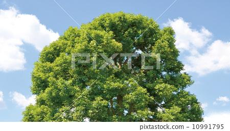 Real tree 10991795