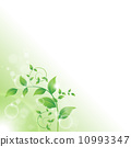 branch with fresh green leaves 10993347