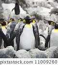 Emperor penguins 11009260