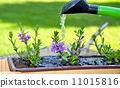 watering, water, can 11015816