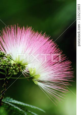 꽃 -4 11021803