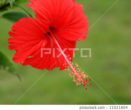 花兒-5 11021804