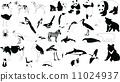 Black-and-white animals 11024937